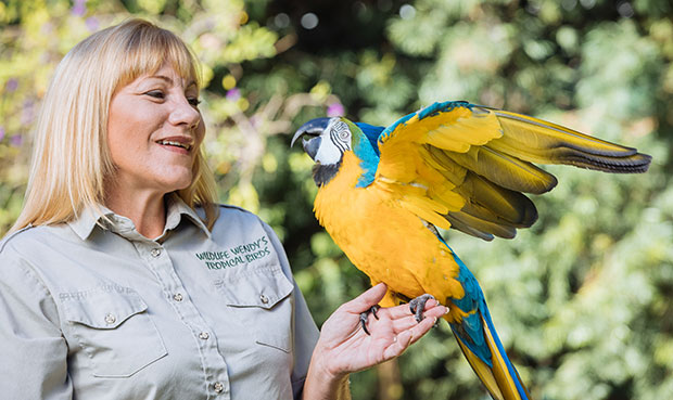 Most rings placed on a target by a parrot trainer Wendy
