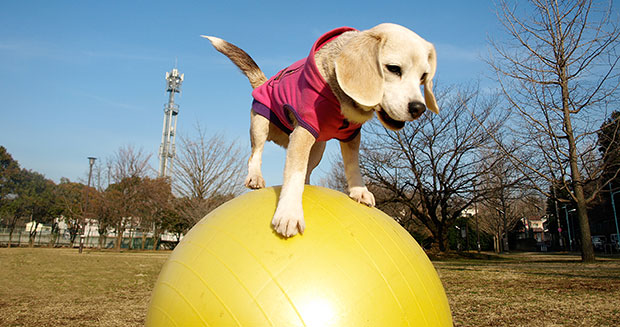 most-balls-caught-by-a-dog-with-the-paws-in-one-minute-fastest-10-m-on-ball